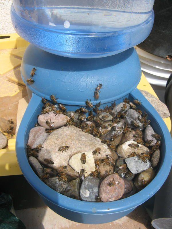 bebedero para abejas 3