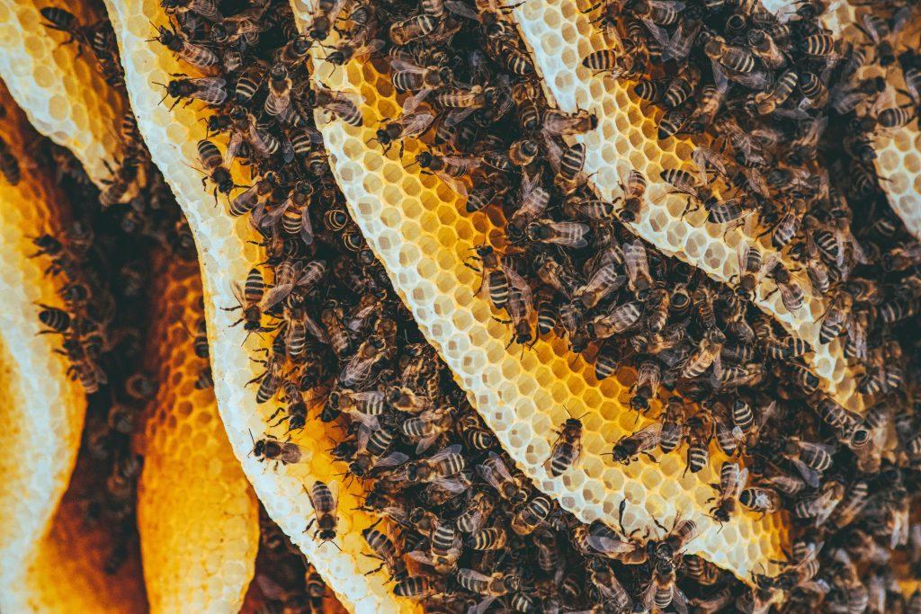 abejas-dia-medio-ambiente
