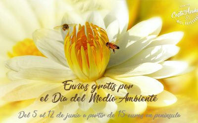 Sin abejas no habría vida. ¡Celebra el Día del Medio Ambiente con Apícola!